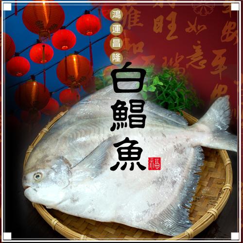 【築地一番鮮】頂級野生白鯧魚(已去肚淨重500g±10%/尾)