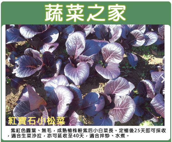 【蔬菜之家】A75.紅寶石小松菜種子