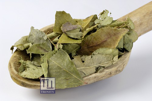 Curry Leaves 印度咖哩葉