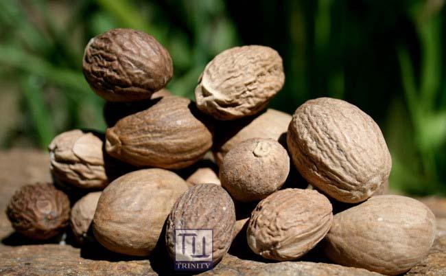 Nutmeg Whole 印度肉荳蔻