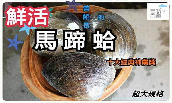 ♗曾館長➔神農獎 〈馬蹄蛤〉1斤3~4顆X3斤/组(大規格)→【SDF雲閣百貨】