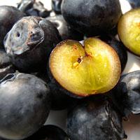 美國空運直達★新鮮加州藍莓(四盒入)★頭好壯壯酸甜滋味~##F0016*4