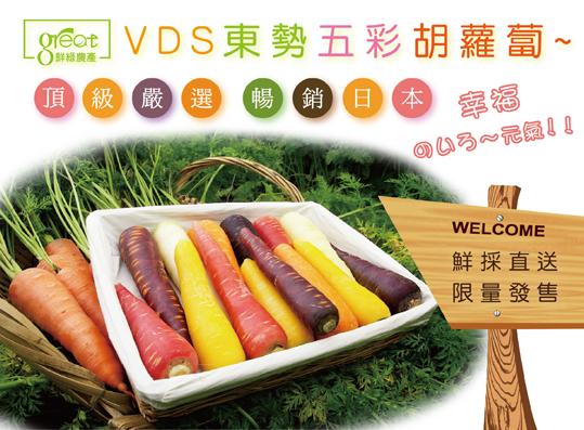 VDS東勢五彩胡蘿蔔