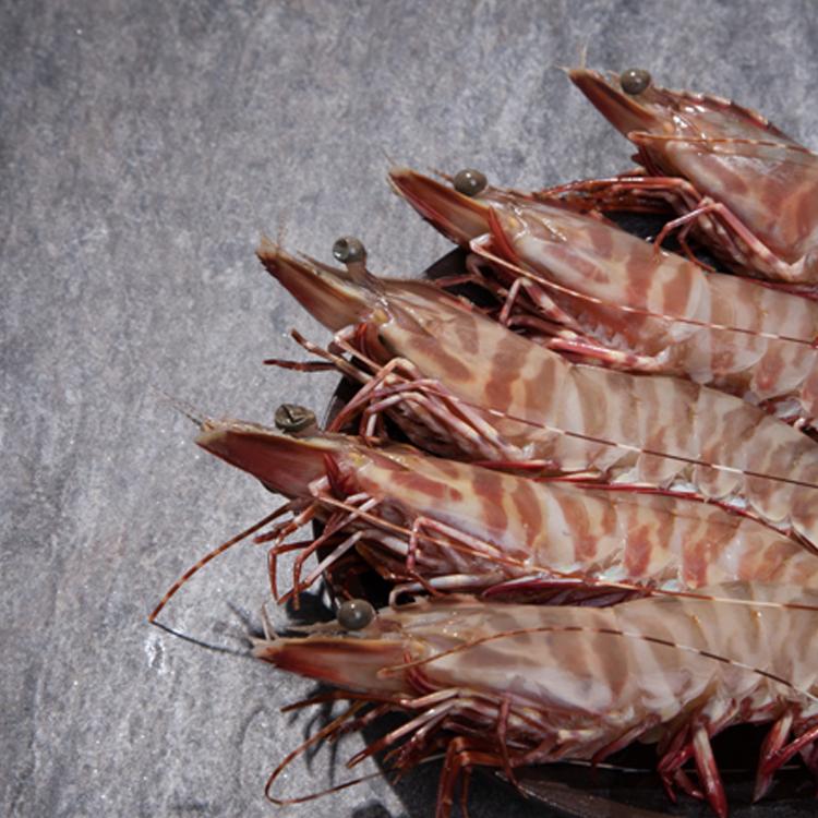 【賣漁人家】澳大利亞生猛斑節蝦(1.5kg±10%)