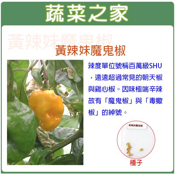 【蔬菜之家】G40黃辣妹魔鬼椒種子6顆