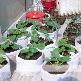 【種植袋-M300】種菜盆 植樹袋 美植袋(直徑28*23mm) 最低訂購量 5個-5101002