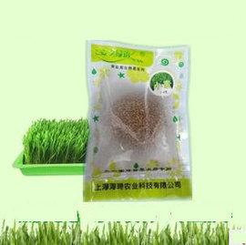 【小麥草種子-150g】無農藥殘留,可種本店小麥草種植盤一盤,每盤剪草150~210g,約150g/包,6包/組-5101004