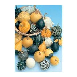 【蔬果種子-玩偶南瓜-10粒-原包】家庭園藝盆栽蔬菜,廠家封裝,約10粒/包,10包/組-5101002