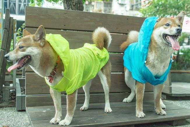 超薄型狗狗雨衣 防紫外線  輕便寵物雨衣