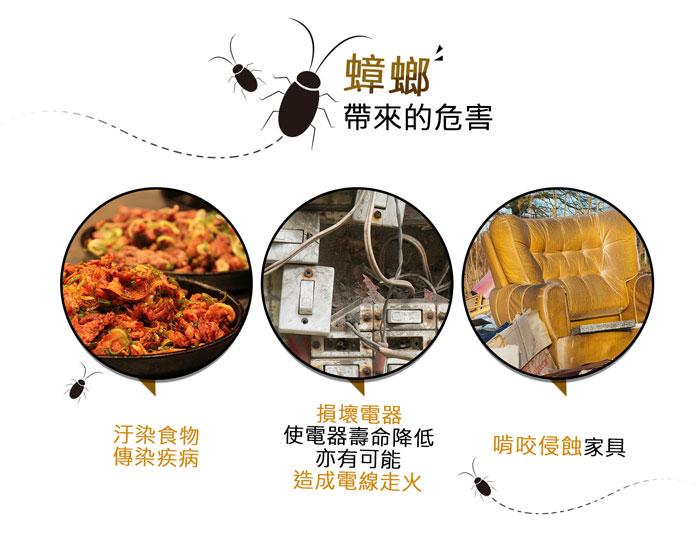 DigiMaxUP-6EA滅蟑戰艦環保電子捕蟑器網頁圖