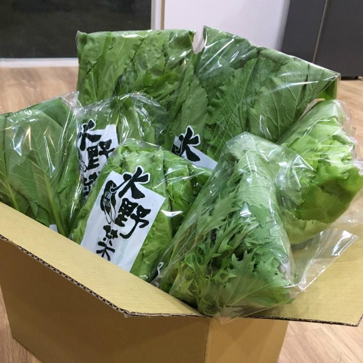 『水野菜』無農藥蔬菜箱 6包組 (含運) 隨機出貨