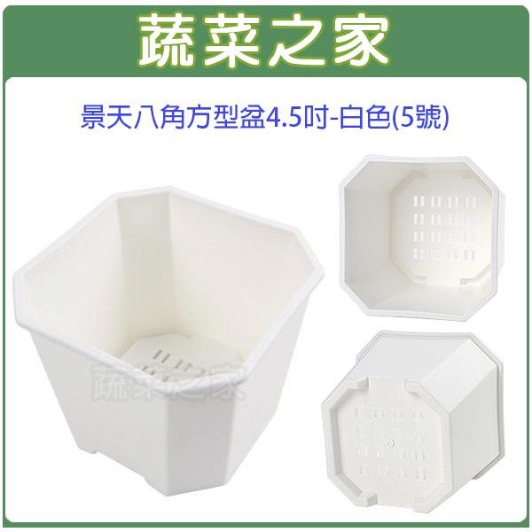 【蔬菜之家005-D132-WI】景天八角方型盆4.5吋-白色(5號)