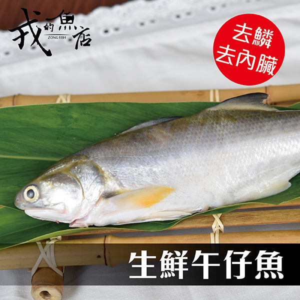 【午仔魚一夜干 130~160g/尾】新鮮活撈現宰,用一夜干的手法濃縮美味!