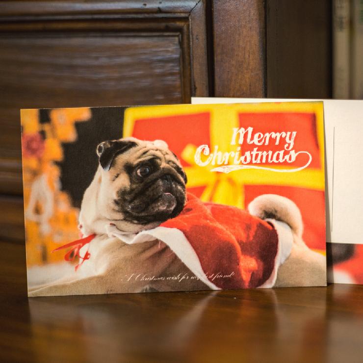 普萊森特|巴哥聖誕明信片