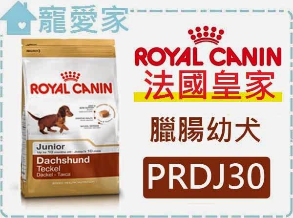 ☆寵愛家☆法國皇家PRDJ30臘腸幼犬1.5公斤.