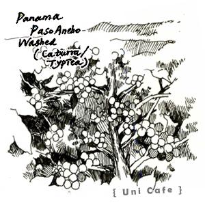 【UNI 咖啡原豆】巴拿馬 帕索安丘 水洗豆