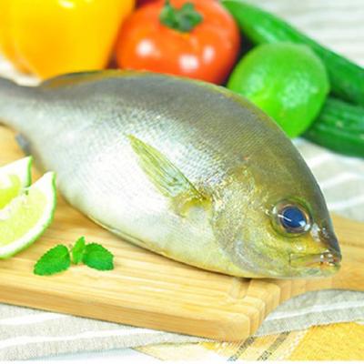 野生黃雞魚(煎,清蒸,紅燒都合適)