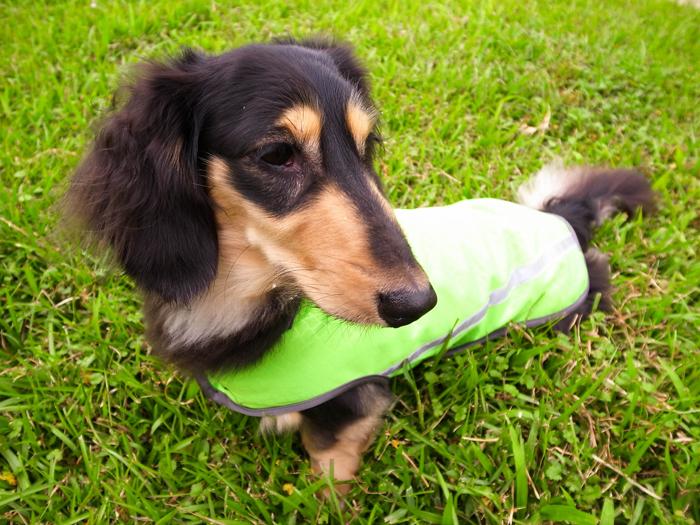 【綺康健康生活館】獨家寵物智慧衣(L)中型犬/C6螢光綠