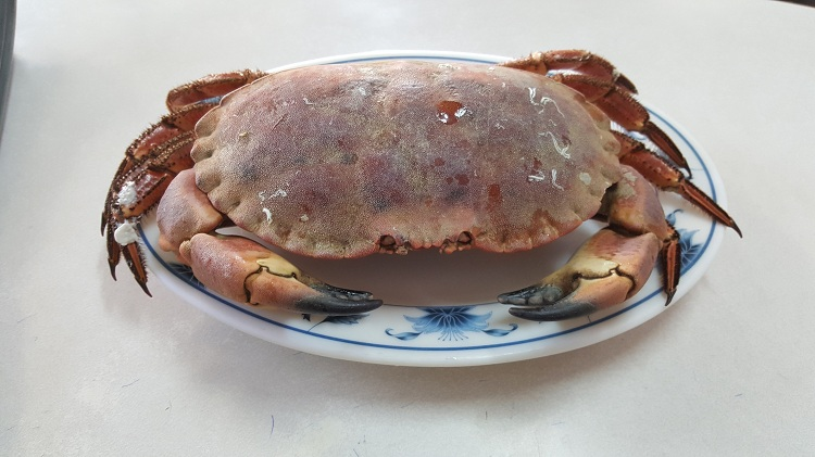 【海濱海產】英國霸王蟹(蟹黃超多)