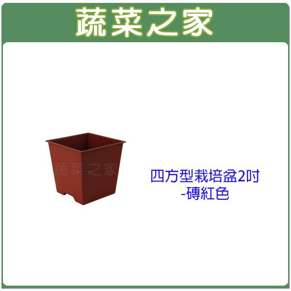【蔬菜之家005-D112-RE】四方型栽培盆2吋-磚紅色