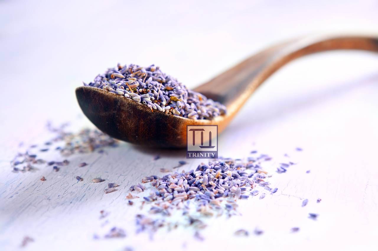 Lavender Flower 薰衣草