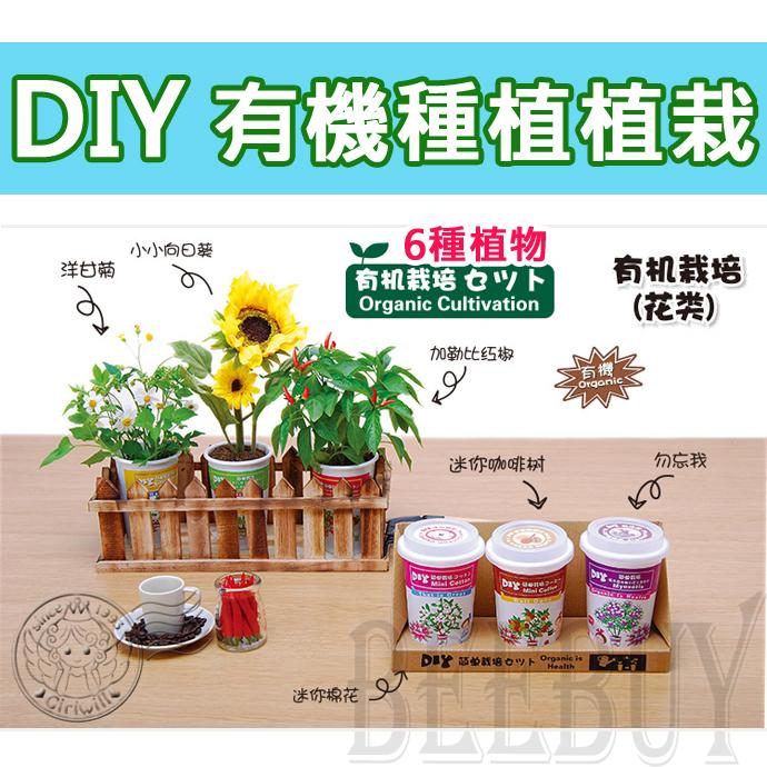 DIY有機種植 六種 植物 向日葵 洋甘菊 勿忘我 棉花 加勒比紅椒 咖啡樹 家庭 造景 裝飾物 園藝 小品植栽 享受 種植 樂趣