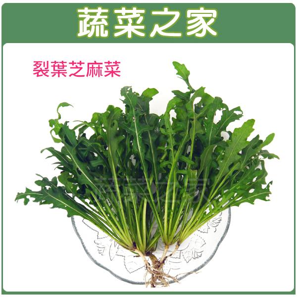 【蔬菜之家】A64.裂葉芝麻菜種子1000顆