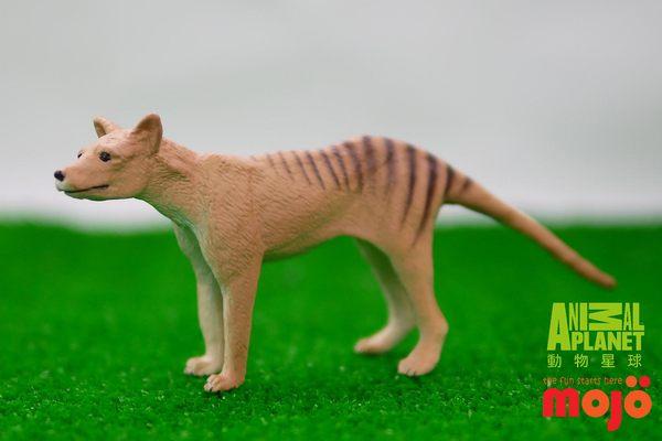 【MOJO FUN 動物模型】袋狼