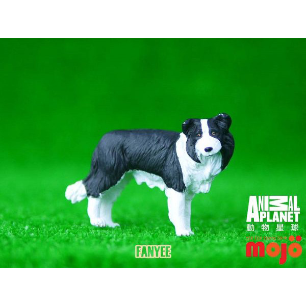 【MOJO FUN 動物模型】動物星球頻道獨家授權 - 邊境牧羊犬