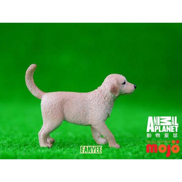 【MOJO FUN 動物模型】動物星球頻道獨家授權 - 黃金獵犬幼犬