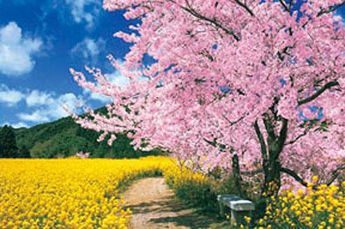 【P2 拼圖】櫻花與向日葵 拼圖 1000片 ( HM100-273 )
