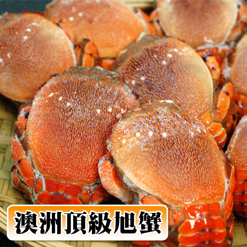買1送1組【築地一番鮮】澳洲母旭蟹1kg/約5-7隻(小家庭聚餐)超值免運組