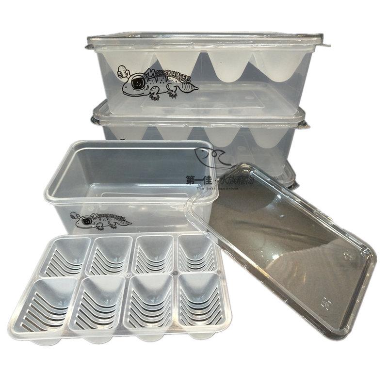 [第一佳 水族寵物] 精緻蛋托 8孔 爬蟲孵蛋盒(飼料盆 飼養箱 爬箱)兩棲 守宮 蜥蜴 水龜 小型動物