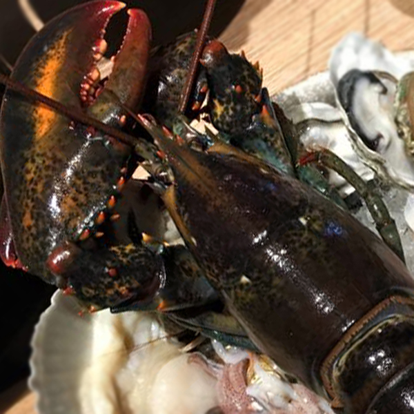 波士頓螯龍蝦 每隻500~600g 壹對大螯挑戰視覺極限 肉質緊實彈牙!