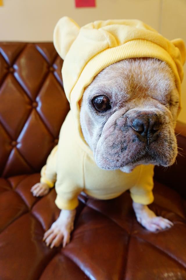 【LOHAS BULL】大特價 日本原裝進口 PARIERO  MALL  黃色可愛連帽小耳朵  咖啡熊 狗衣 犬用衣服