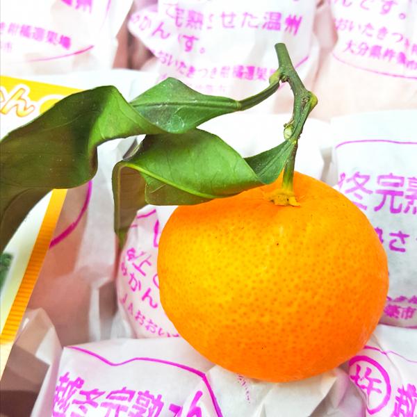 ( 完售 )【 日本大分縣套袋越冬珍珠蜜柑 】免運~