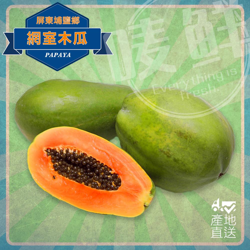 【嘜鮮】日本人的最愛-外銷品種網室甜木瓜/顆,果肉厚實又綿密!