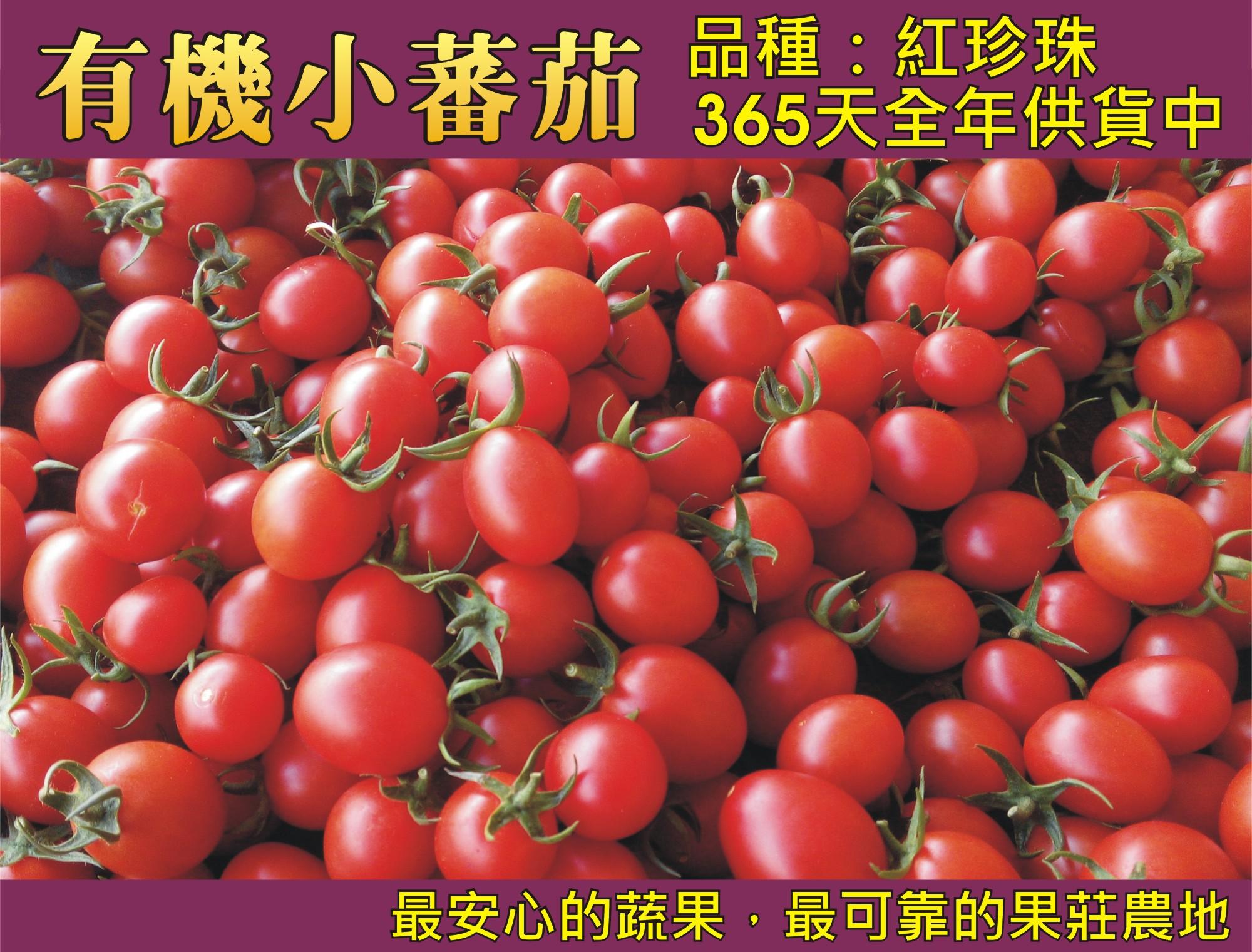 有機小蕃茄(365天全年供應)