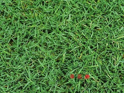 【尋花趣】百慕達草 已脫殼 (每包1公斤)  草籽 種子 百慕達 狗牙根 絆根草 鐵線草 牛馬根 馬根子草 鋪地草 銅絲草
