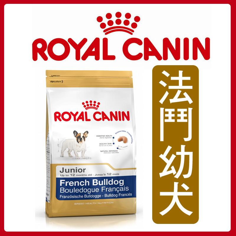 ★汪咪堡★法國皇家法鬥幼犬-3kg