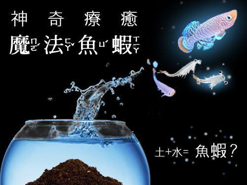 神奇療癒魔法魚.魔法蝦孵化培養組 (現貨+預購)