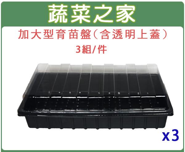 【蔬菜之家005-C77】加大型育苗盤(含透明上蓋)3組/件(育苗箱)