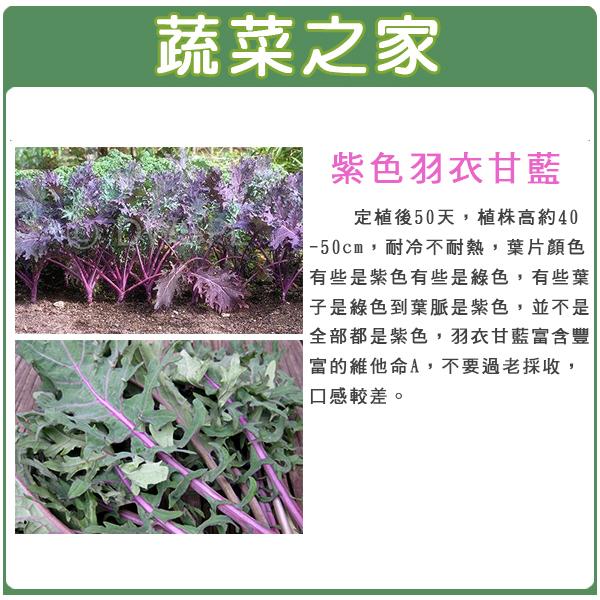 【蔬菜之家】A74.紫色羽衣甘藍種子100顆