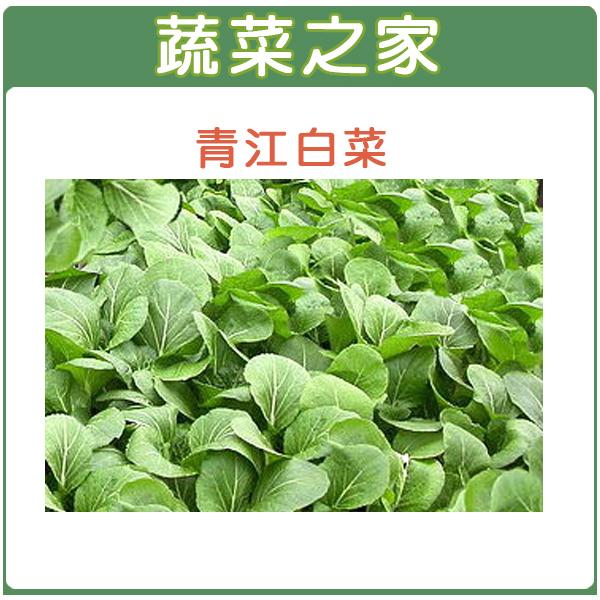 【蔬菜之家】A03.青江白菜種子10000顆