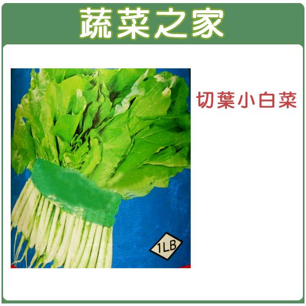 【蔬菜之家】A05.切葉小白菜種子2500顆