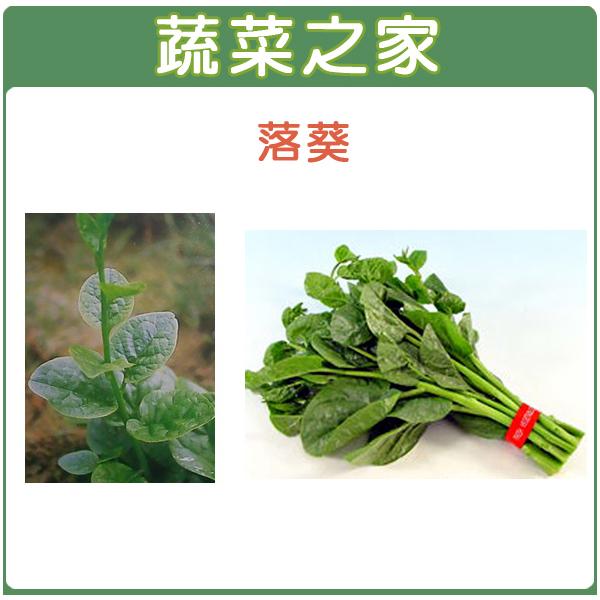 【蔬菜之家】A08.落葵種子120顆