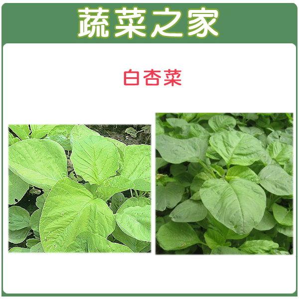 【蔬菜之家】大包裝A13.白杏菜種子250克