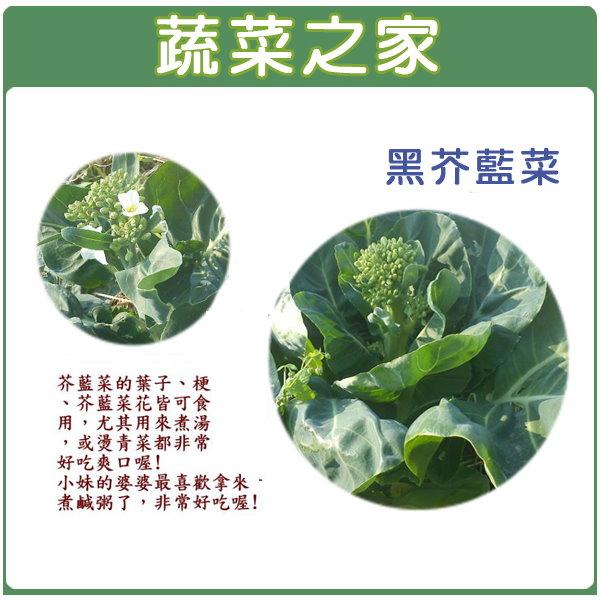 【蔬菜之家】A14.黑芥藍菜種子3500顆