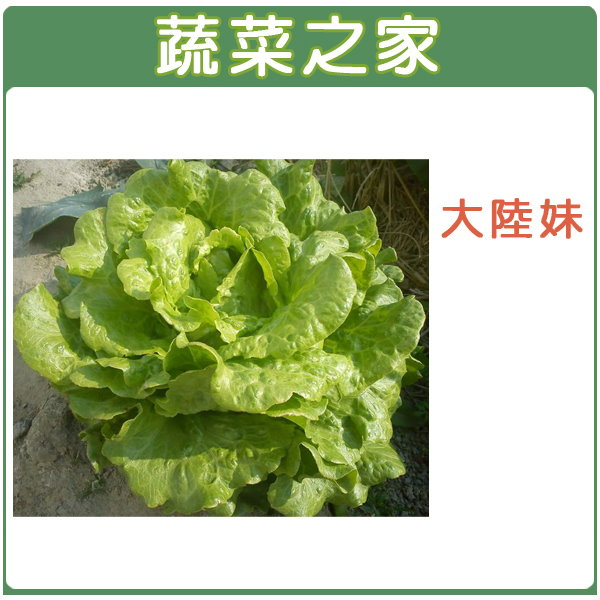 【蔬菜之家】A19.大陸妹種子(日本進口大陸A菜) 2500顆