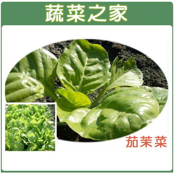 【蔬菜之家】A22.茄茉菜種子(白葉種 ,君達菜、菾菜)600顆